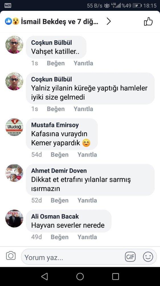 """Vahşet Görüntülerini """"Yılanla Dans"""" Deyip Paylaştı"""