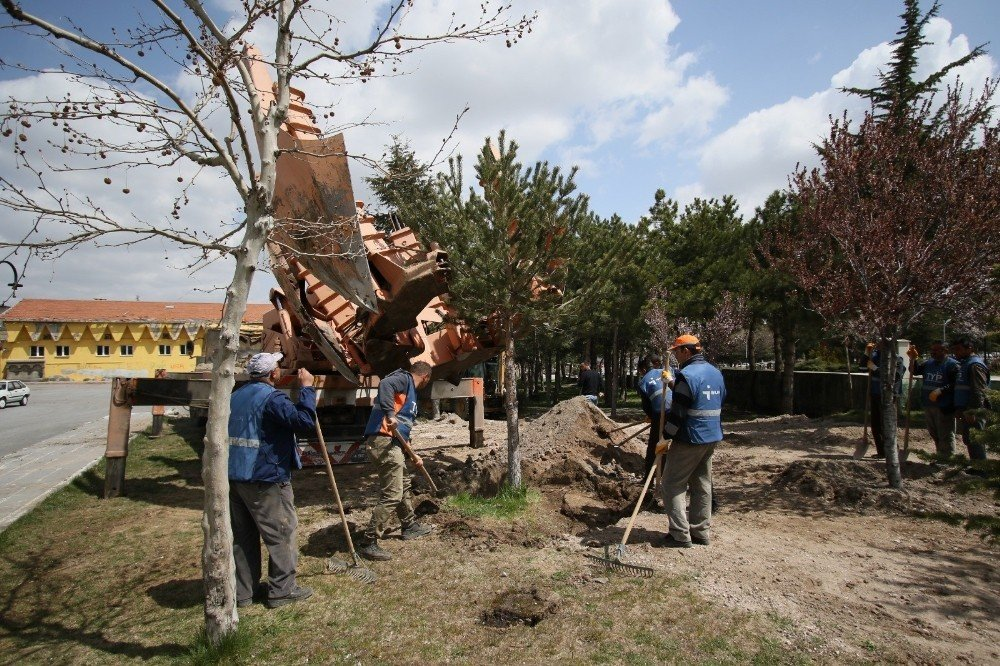 Hacılar Belediyesi'nden Çevre Dostu Çalışma