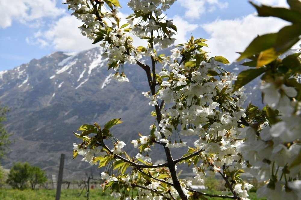 Isparta'da 'Sakura' Vakti