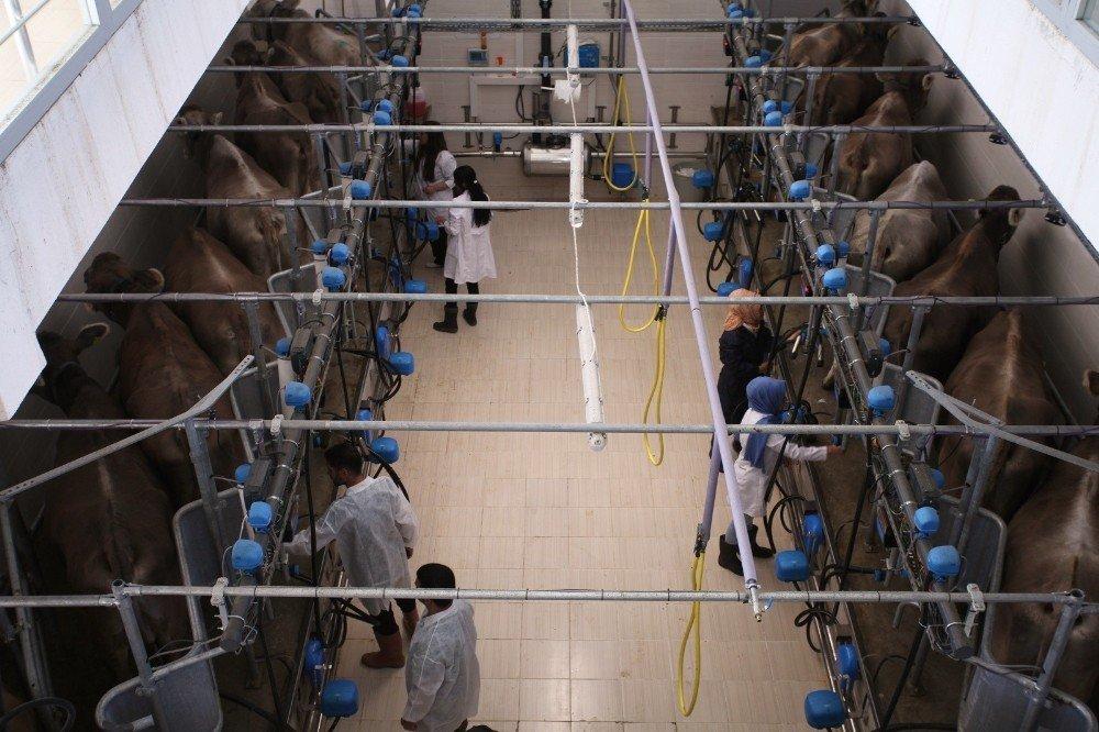 Eleşkirt Celal Oruç Hayvansal Üretim Yüksekokulu Öğrencilerine İlk Kez Meslek Tanımı Verildi