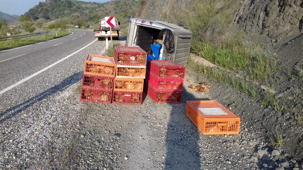 Tavuk Yüklü Hafif Ticari Araç Devrildi:1 Yaralı