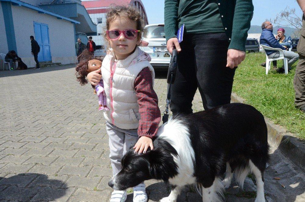 Uluslararası Köpek Güzellik Yarışması, Renkli Görüntülere Sahne Oldu
