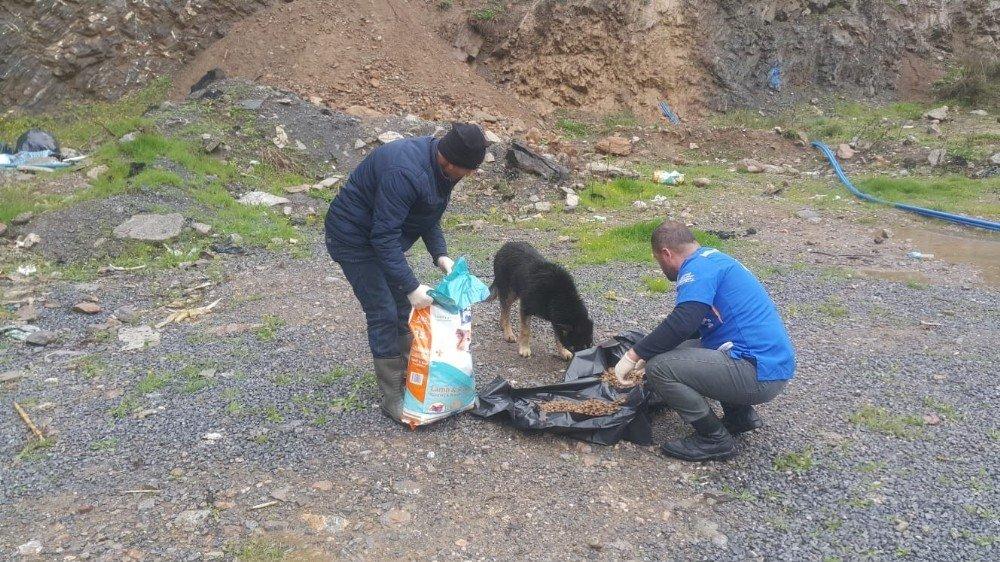 Hakkari'de Sokak Hayvanları İçin Yemleme Çalışması