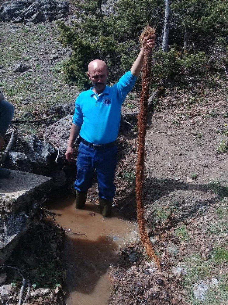 Su Hattından 4 Metrelik Ağaç Kökü Çıktı