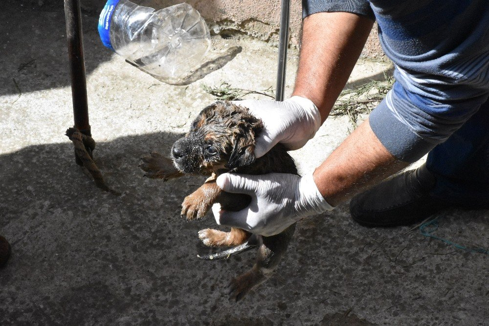 Su Borusuna Düşen Yavru Köpeği Belediye Ekipleri Kurtardı