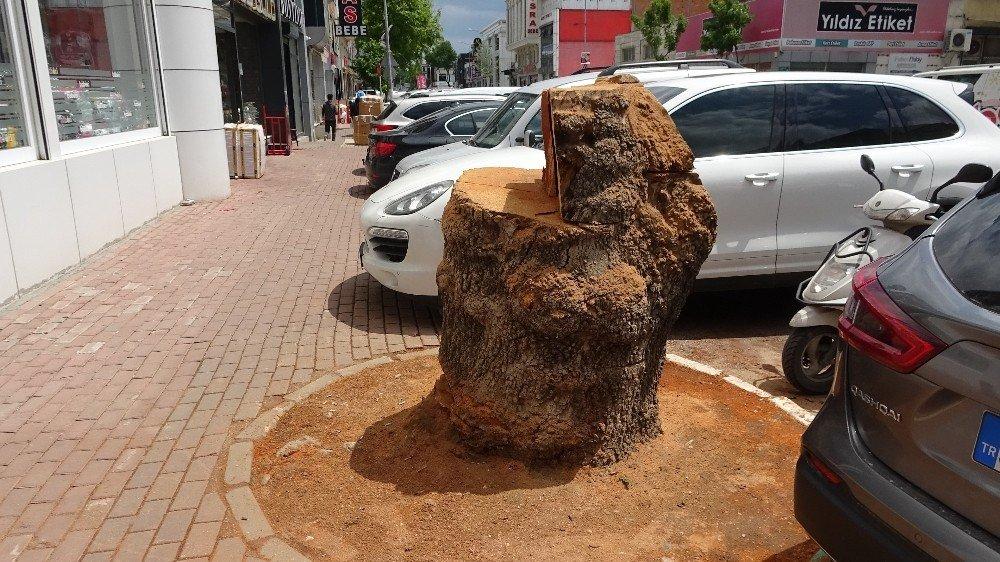 Yüz Yıllık Çınar Ağacını Gece Operasyonuyla Ortadan Kaldırdılar