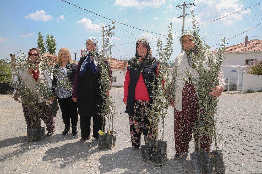 Buca'nın Mahallerinde Zeytin Seferberliği