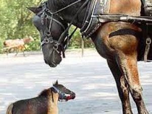 Dünyanın En Minik Atı