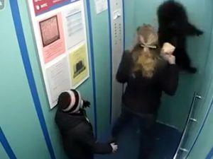 Köpek Asansör Kabininde Asılı Kaldı