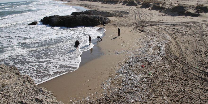 Şok geçiren tonlarca istavrit  Kocaeli sahillerine vurdu