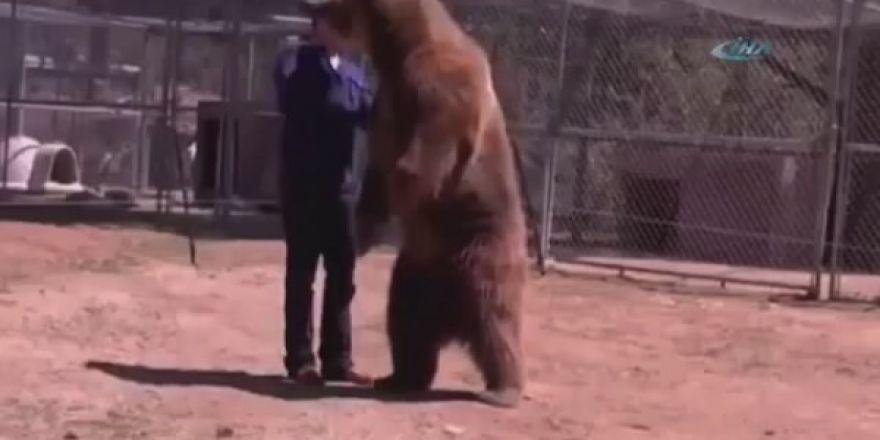 Öfkeli hayvanların gazabı !