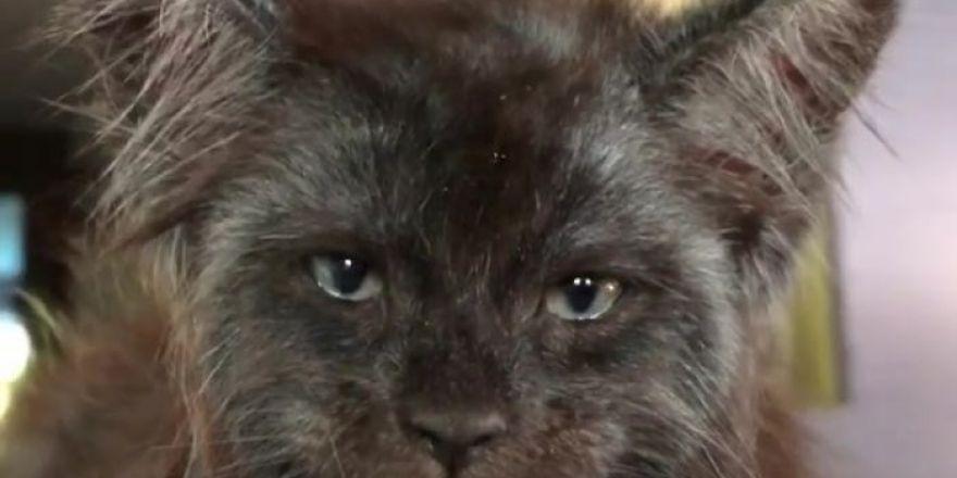 İnsan Yüzlü Kedi Görenleri Hayrete Düşüyor!